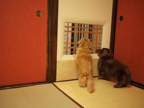 仲居さんを見送るランディとタフィ