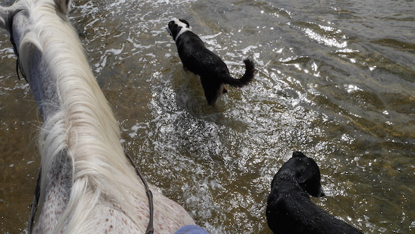 dogs in the lagoon